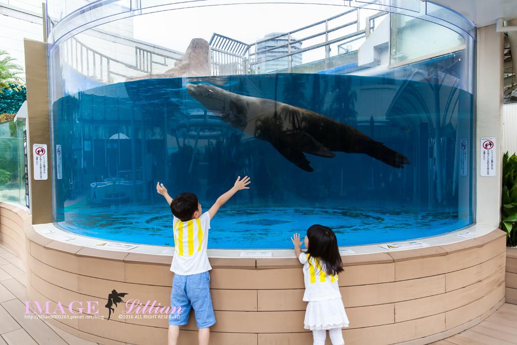 Aquarium-76.jpg