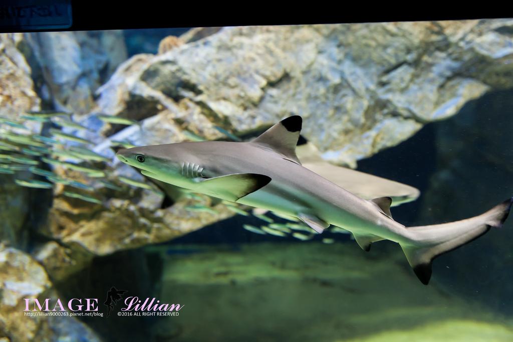 Aquarium-83.jpg