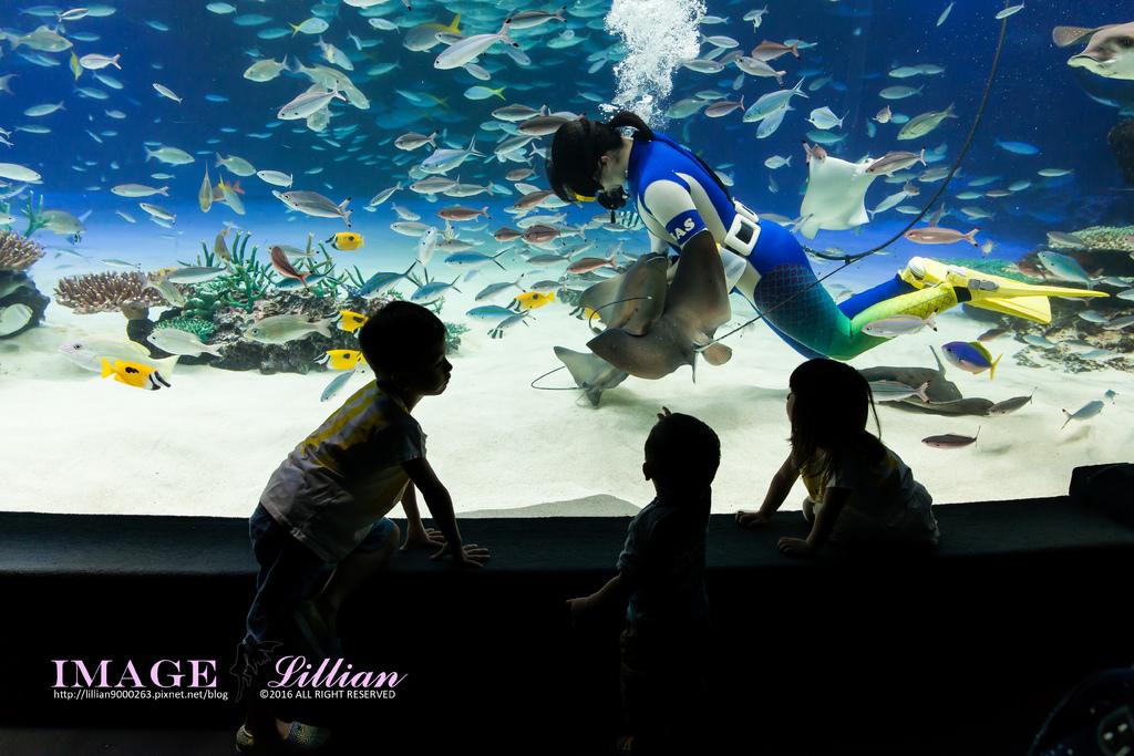 Aquarium-80.jpg