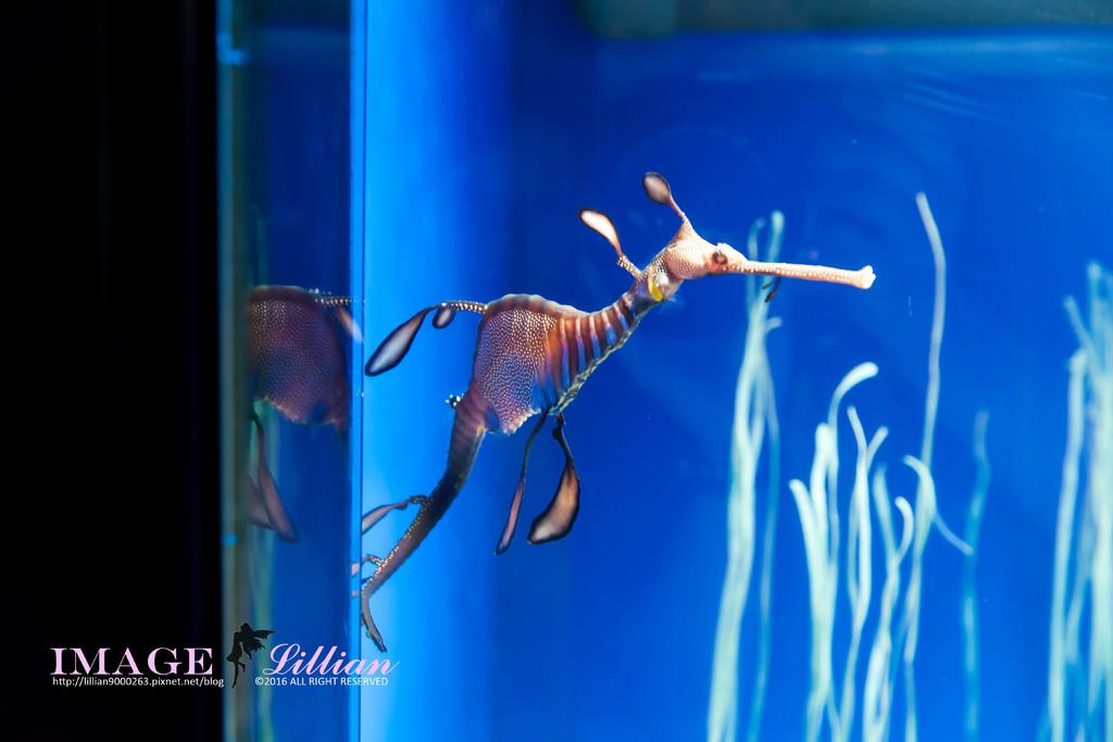 Aquarium-87.jpg