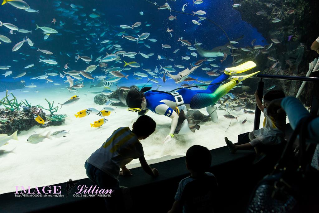 Aquarium-79.jpg