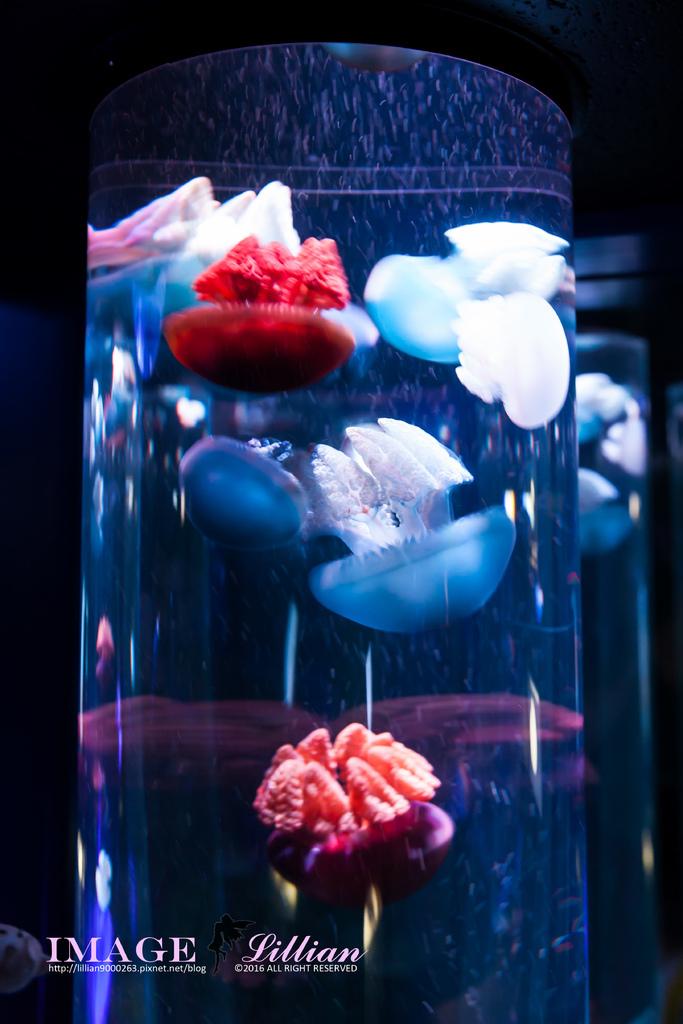 Aquarium-93.jpg