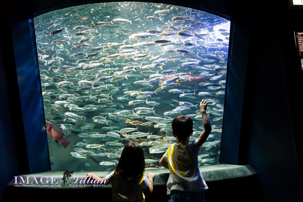 Aquarium-89.jpg
