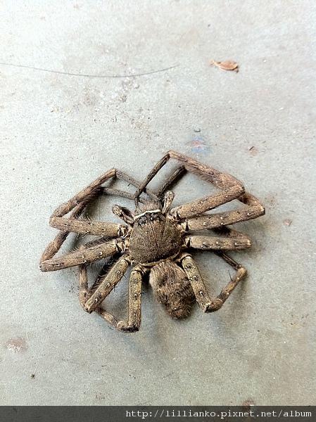 2011.02.09 spider.JPG