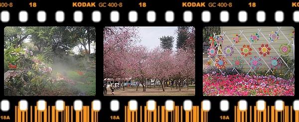 小坵‧洋紫荊‧花屋.jpg
