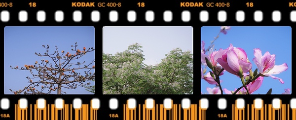 青花瓷的浪漫2.jpg