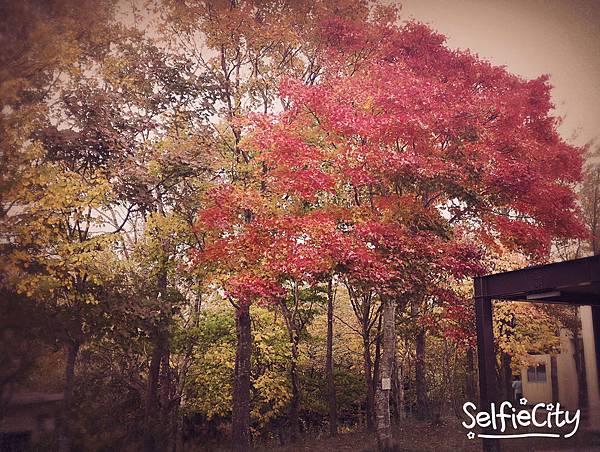 SelfieCity_20151011094141_save.jpg