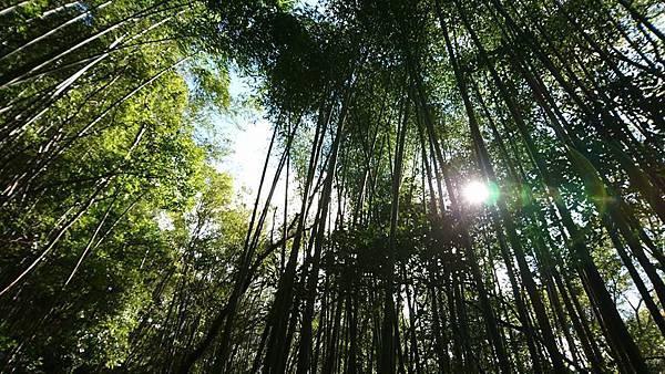 秀巒楓紅野溪溫泉14.jpg