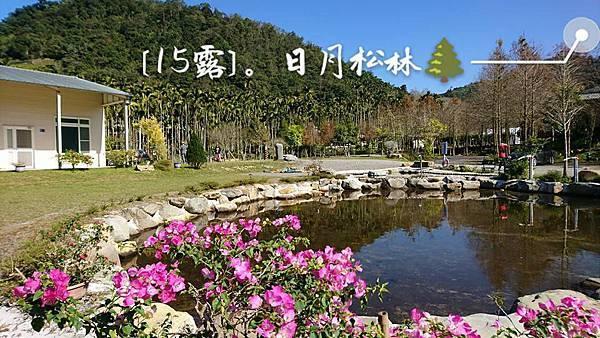 露_日月松林15.jpg