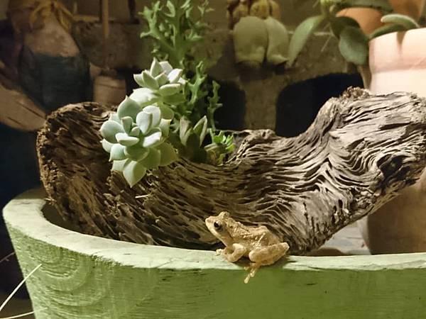花園裡的小青蛙02.jpg