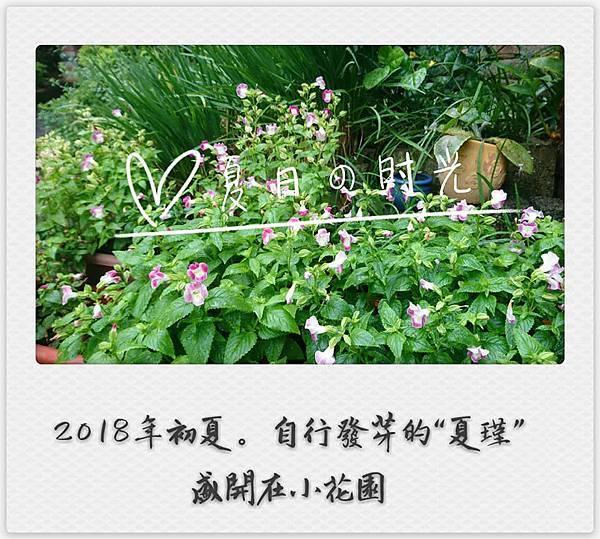 2018 小花園02.jpg