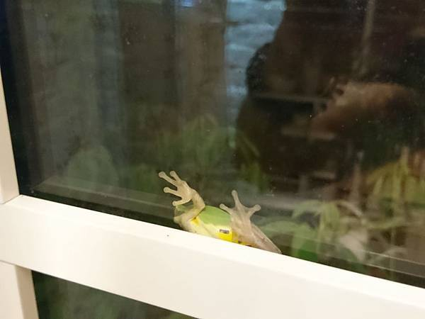 花園裡的樹蛙07.jpg