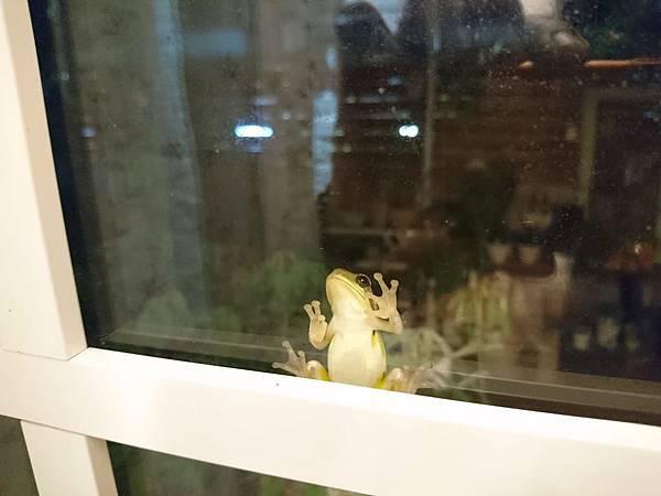 花園裡的樹蛙09.jpg