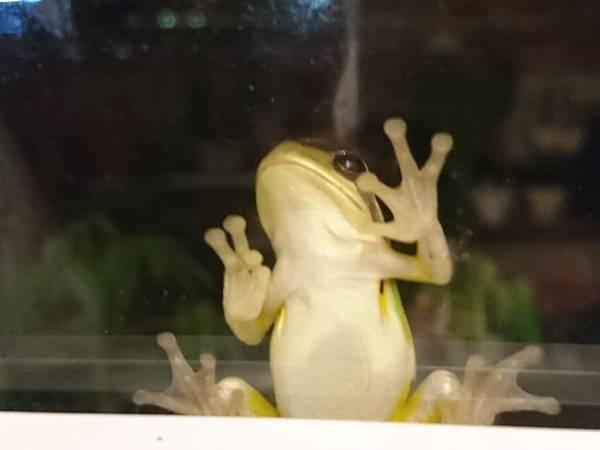 花園裡的樹蛙08.jpg