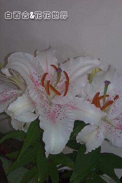 花影像055.jpg