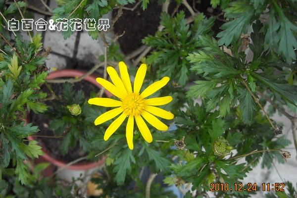 花DSCN0053.jpg