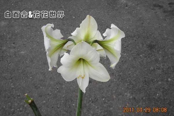 花DSCN8667.jpg