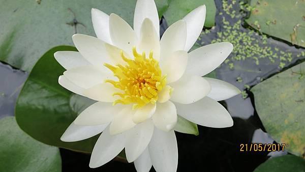 170521清晨花卉中心