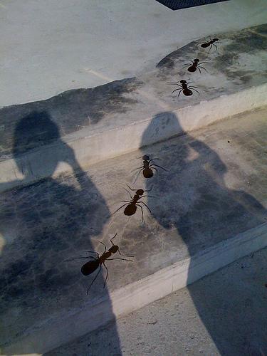 地上的螞蟻爬爬爬