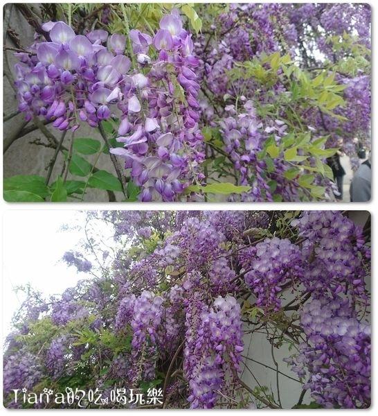 新埔紫藤居3.jpg