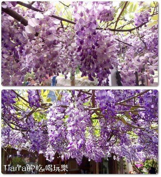 新埔紫藤居6.jpg