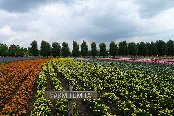 20130816富田農場彩色花田