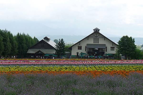 20130816富田農場僅剩的薰衣草