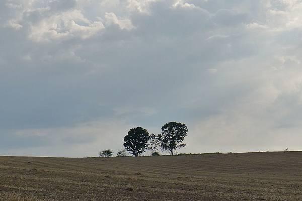 20130816親子之木