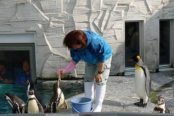 20130818企鵝餵食秀2