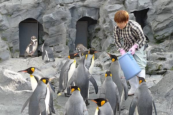 20130818企鵝餵食秀