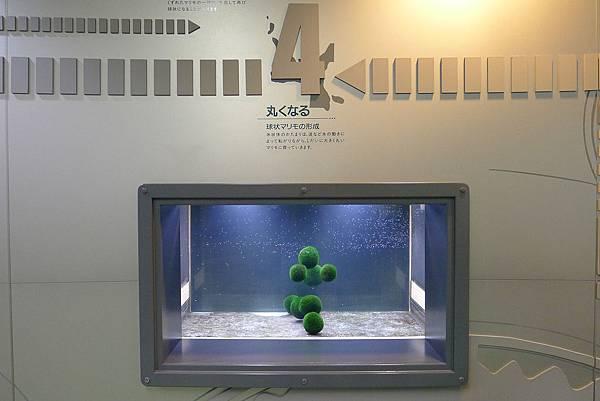 20130821綠球落生長演示