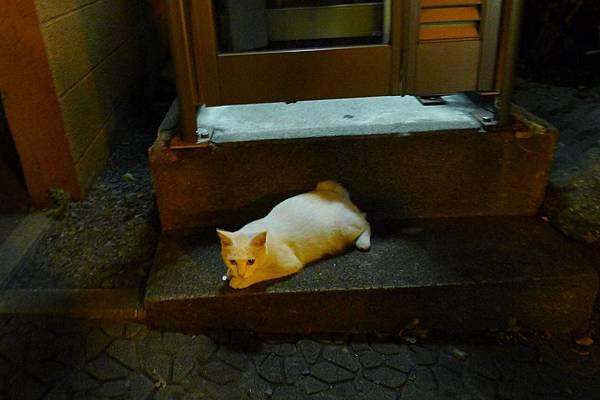 路上的小白貓
