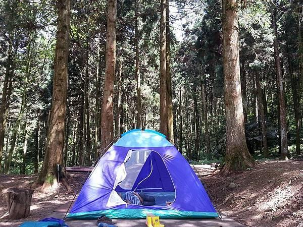 起初森林3