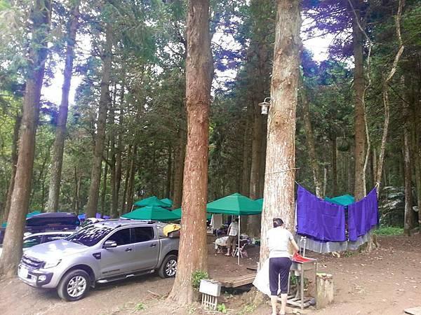 起初森林1