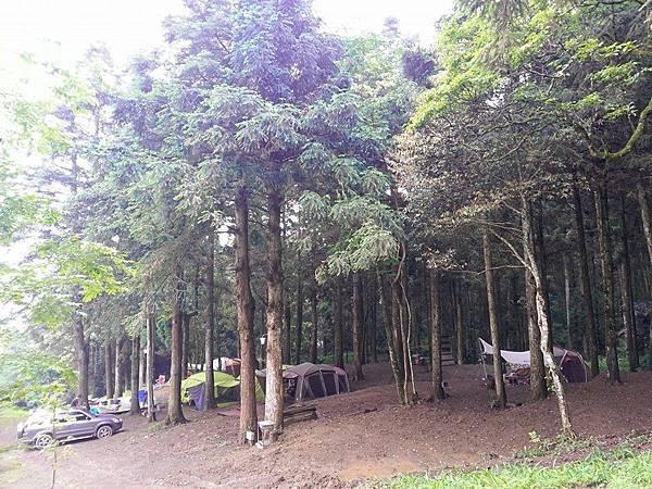 起初森林2