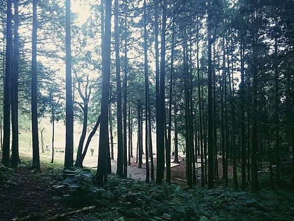 起初森林區