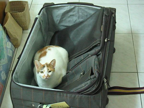20060220-泡泡很開心的窩在我清空的行李箱