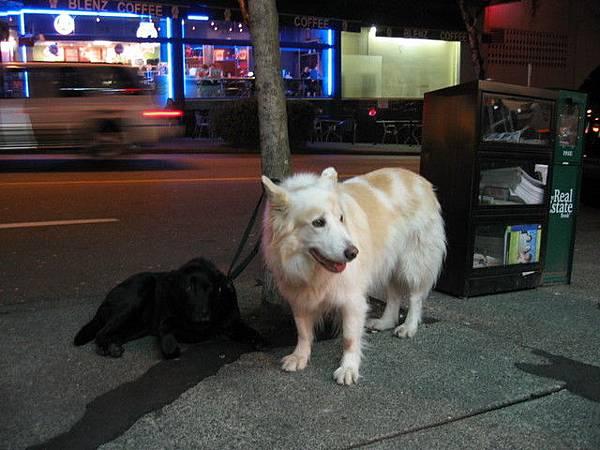 看見兩隻大狗狗,