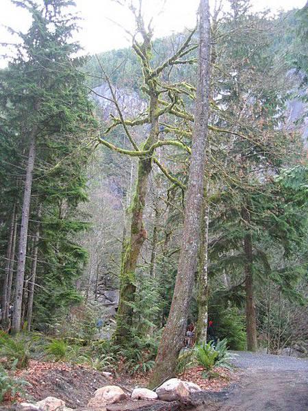 這裡的樹全身長滿青苔耶