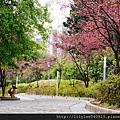 中正紀念堂的櫻花_40.jpg