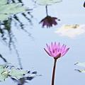 植物園蓮花_14.jpg