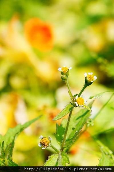 大屯花卉農場_08.jpg