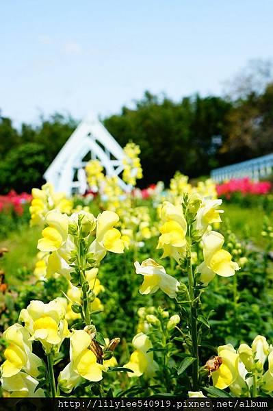 大屯花卉農場_33.jpg