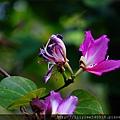 植物園散步_01.jpg