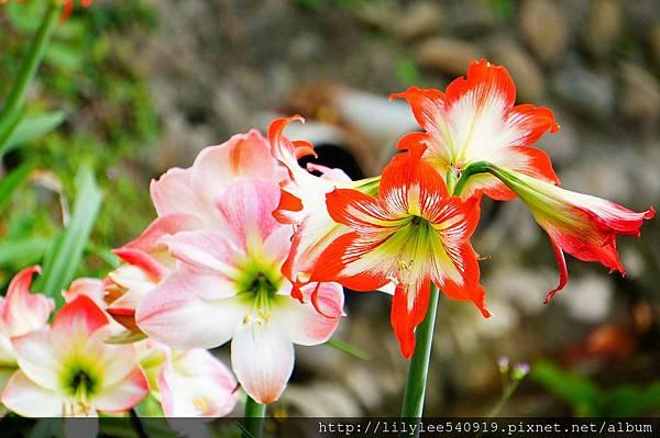 植物園散步_05.jpg