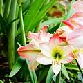 植物園散步_06.jpg
