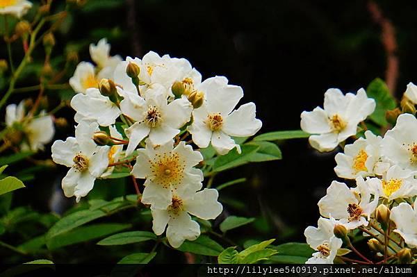植物園散步_08.jpg