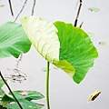 植物園散步_21.jpg