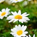 植物園散步_36.jpg
