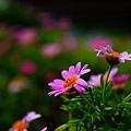 植物園散步_38.jpg